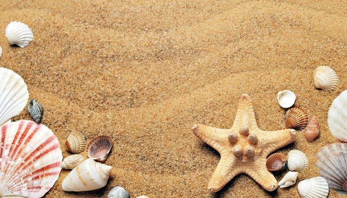 Bricolage con i regali del mare: ci vediamo il 14 Settembre!